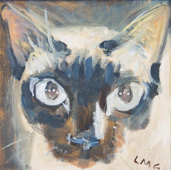 cat_DSC0039-web