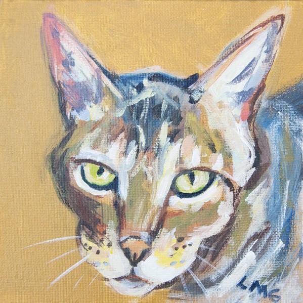 cat_DSC0040-web